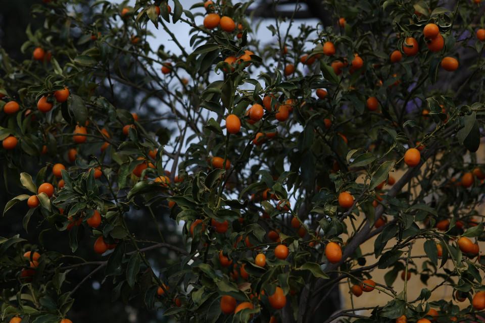 #FreeToEdit #tree #mandarine #orange #beautiful #texture