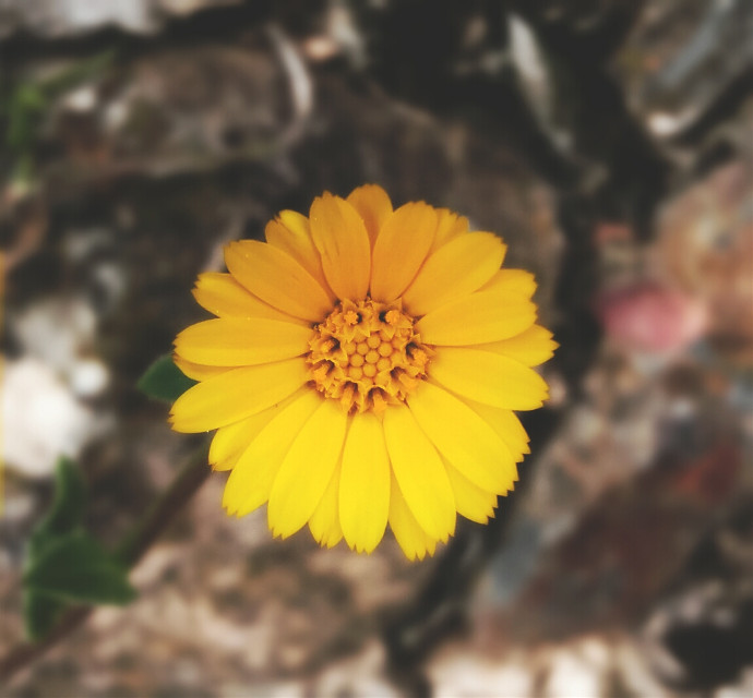#flower  #spring   #summer