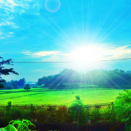 wppsunnyday morning nature love ricefield