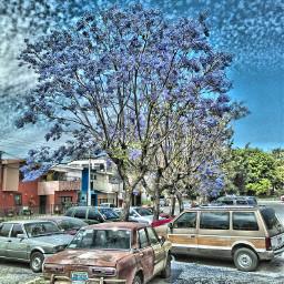 zapopan spring greatday morning elandardiario