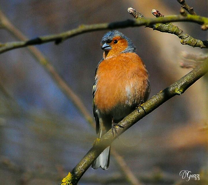 #birds #colorful #nature #freetoedit #cute