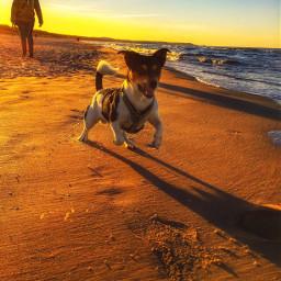 sunset play family love mydog toni dog pets park travel holiday poland nature sea beach naturephotography sun clouds retro horizon sky photography luxxxs