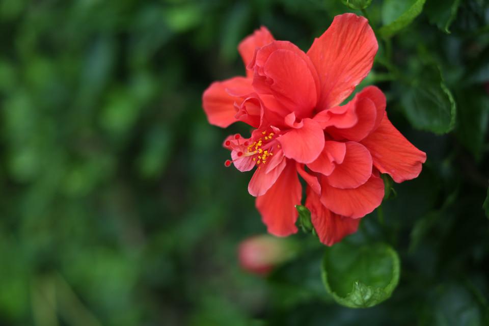 #flower #nature #china