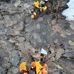spring nature ревеньпроснулся весна настроение