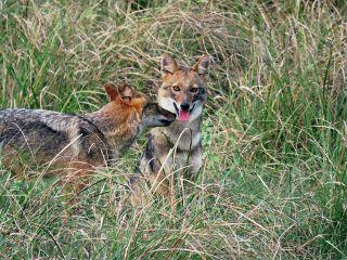 wppzoo fox hdr nature animals