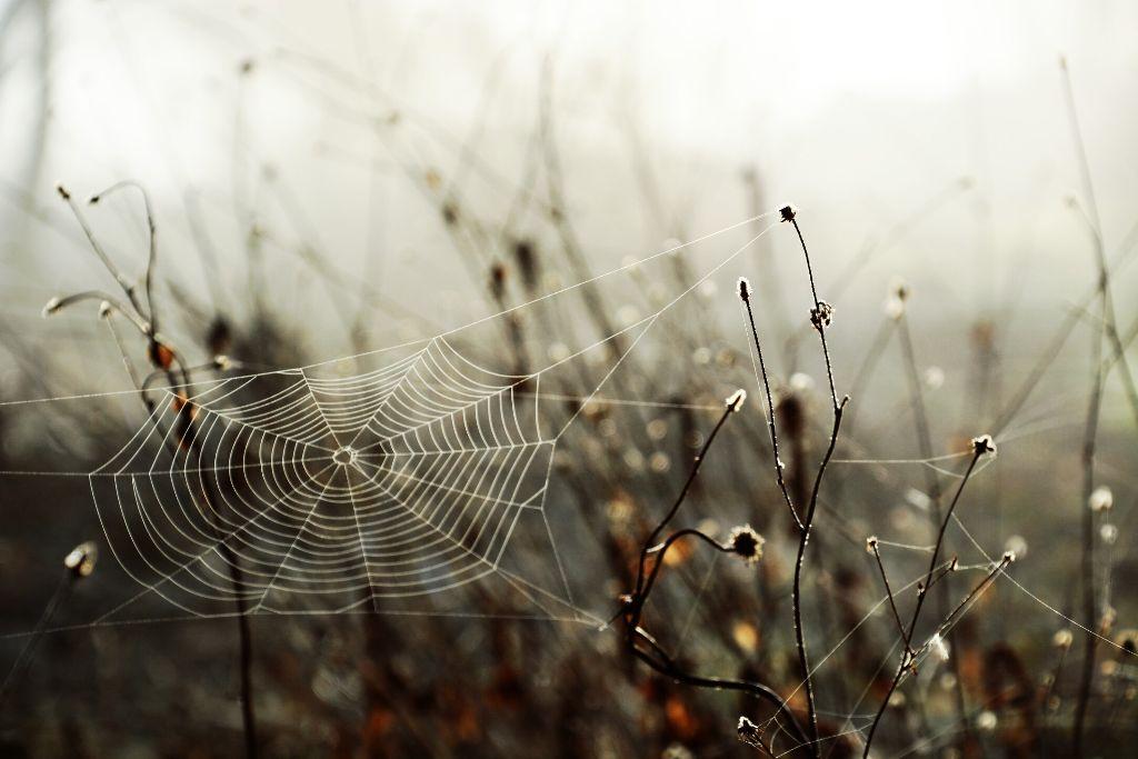 #photography #nature #emotions #fog #web