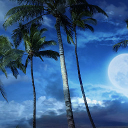beach tropical tree landscape hawaiiphotography