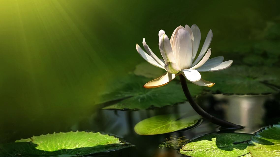 #watarlily #sunlight