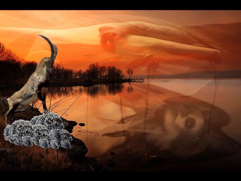 #edited #interesting #photography #doubleexposure #doublexposure #surreal #nature  #animals