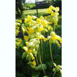 wppnature spring flowers yellow green