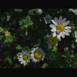 garden closeup macro beauty colorful