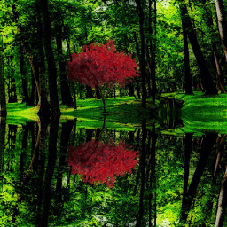 mirrored nature photography wpptrees