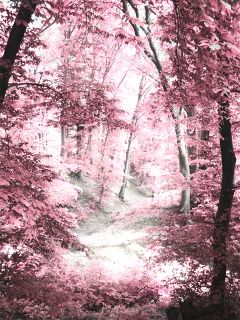 wppnature pink photography woods trees