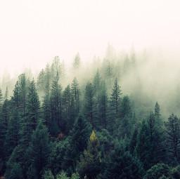freetoedit nature landscape tree trees