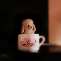 macro photography petsandanimals animals coffee