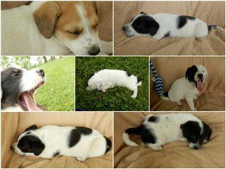 howdoisaygoodbye puppyshoot asleeponthejob petsandanimals puppy