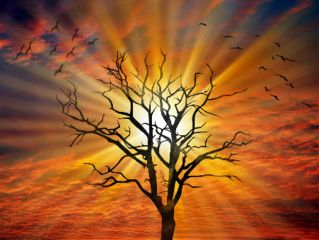 waptreeoverlay colorful nature sunset tree