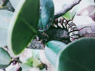wpptrees nature