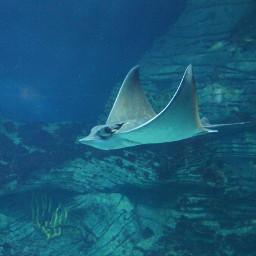 seacat sea spain lovephotography wonderfulplanet