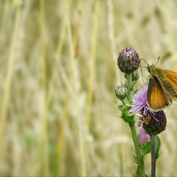 butterfly insect nature naturephotography flower