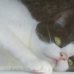 cat animal oilpaintingeffect