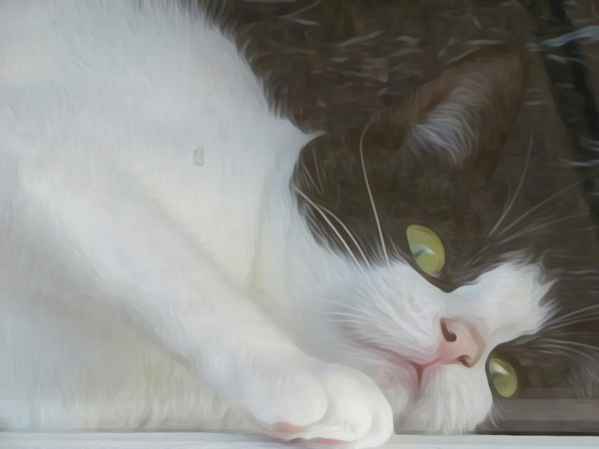 #cat #animal  #oilpaintingeffect