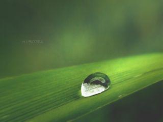 macro nature rain