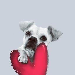freetoedit interesting art dog wallpaper